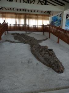 Pliosaur in-situ.