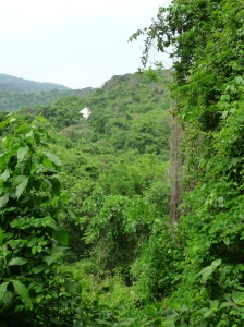 The lush jungle of Tayrona NP