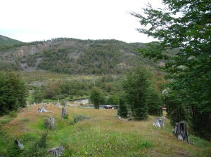 The tree cemetery