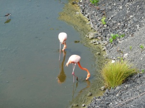 Flamingo Pond on Isabela Island