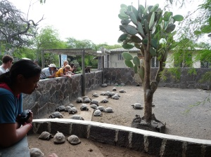 Tortoise Breeding Centre on Isabela Island
