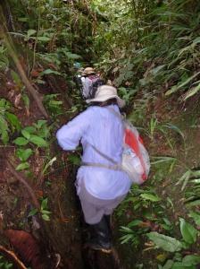 The trek into the Amazon, Napo River area