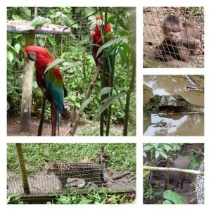 Wildlife at Amazoonica