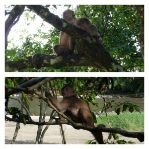 Cheeky monkeys at Mishualli