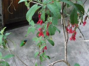 Hummingbird at camp