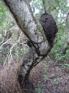 Termites going to town!