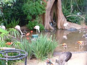Parque de Aves, Foz do Iguacu