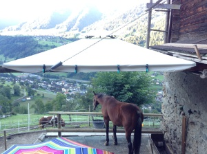 Now that's a horse with a view!